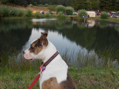 Dog and pond