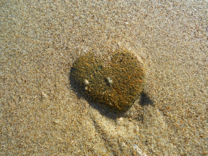 Heart-shaped rock on beach