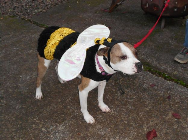 dog in bumblebee costume