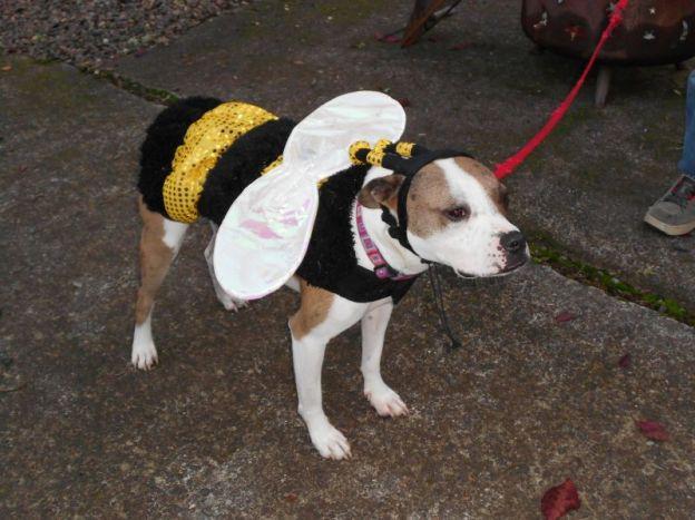 dog in bumblebee costume