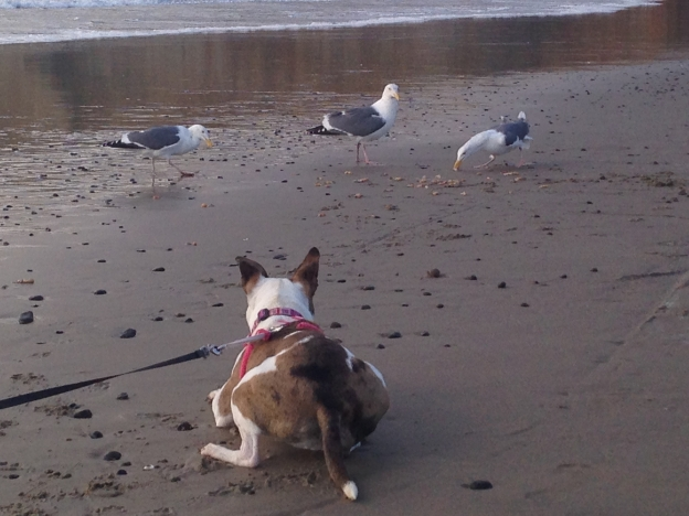 Dog watching seagulls