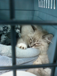 photo of a kitten in a cat carrier