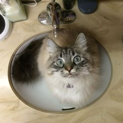 photo of a cat in a sink