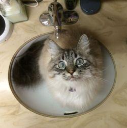 photo of a cat in a sink