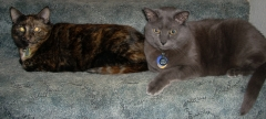 photo of two cats laying on blue carpeted stairs