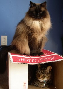 photo of two cats and a box