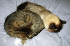 photo of two cats curled up together