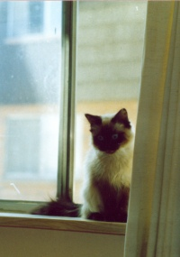 photo of kitten in a window