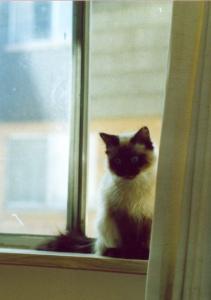 photo of kitten in a window