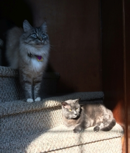 Photo of two cats on stairs