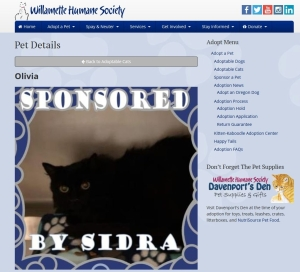 Photo a black cat from a humane society web page